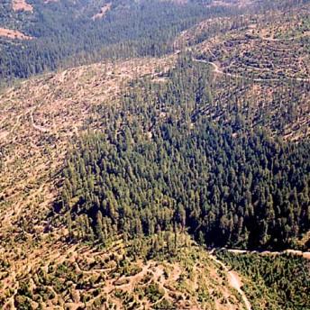The Forest for the Trees Bernadine Mellis